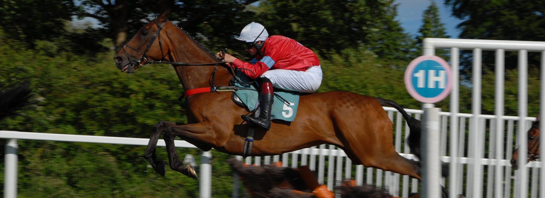 Racehorse Trainers UK