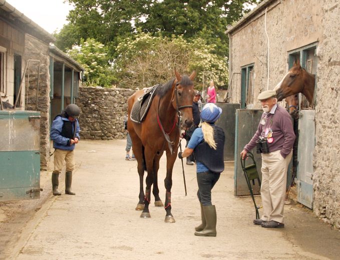 Owning a Racehorse
